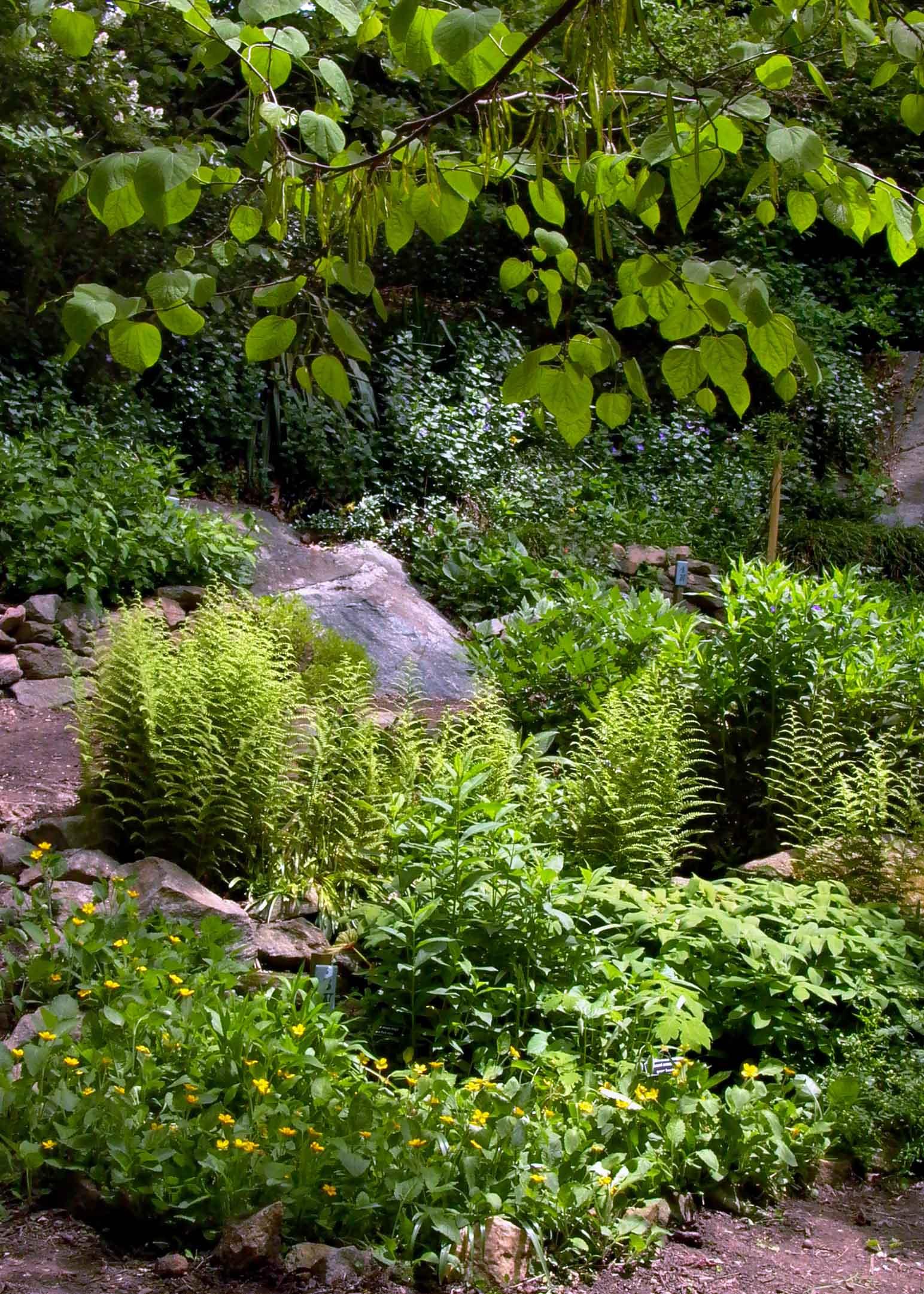 Quarry Shade Garden at Bon Air Park | Master Gardeners of ...