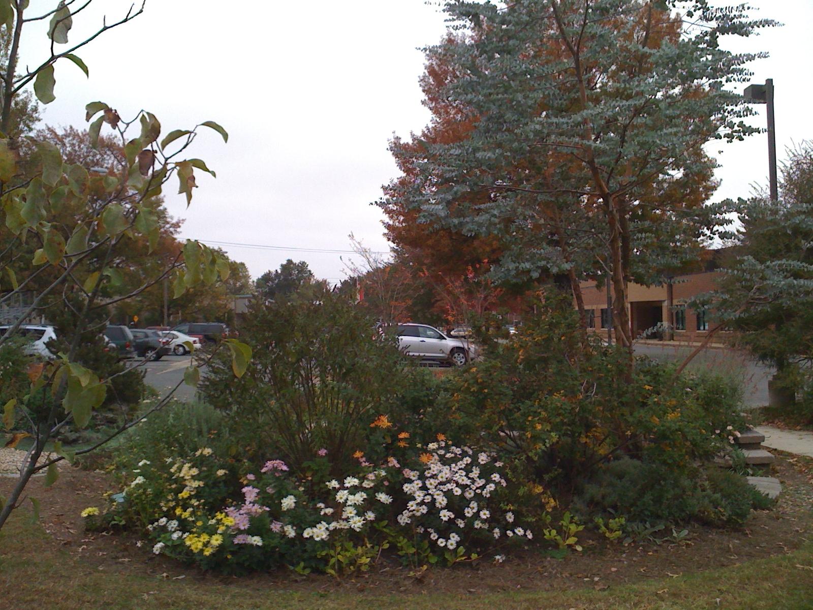 Quarry Shade Garden At Bon Air Park: Simpson Gardens In Alexandria