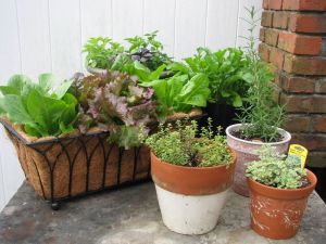 SmallContainerGarden