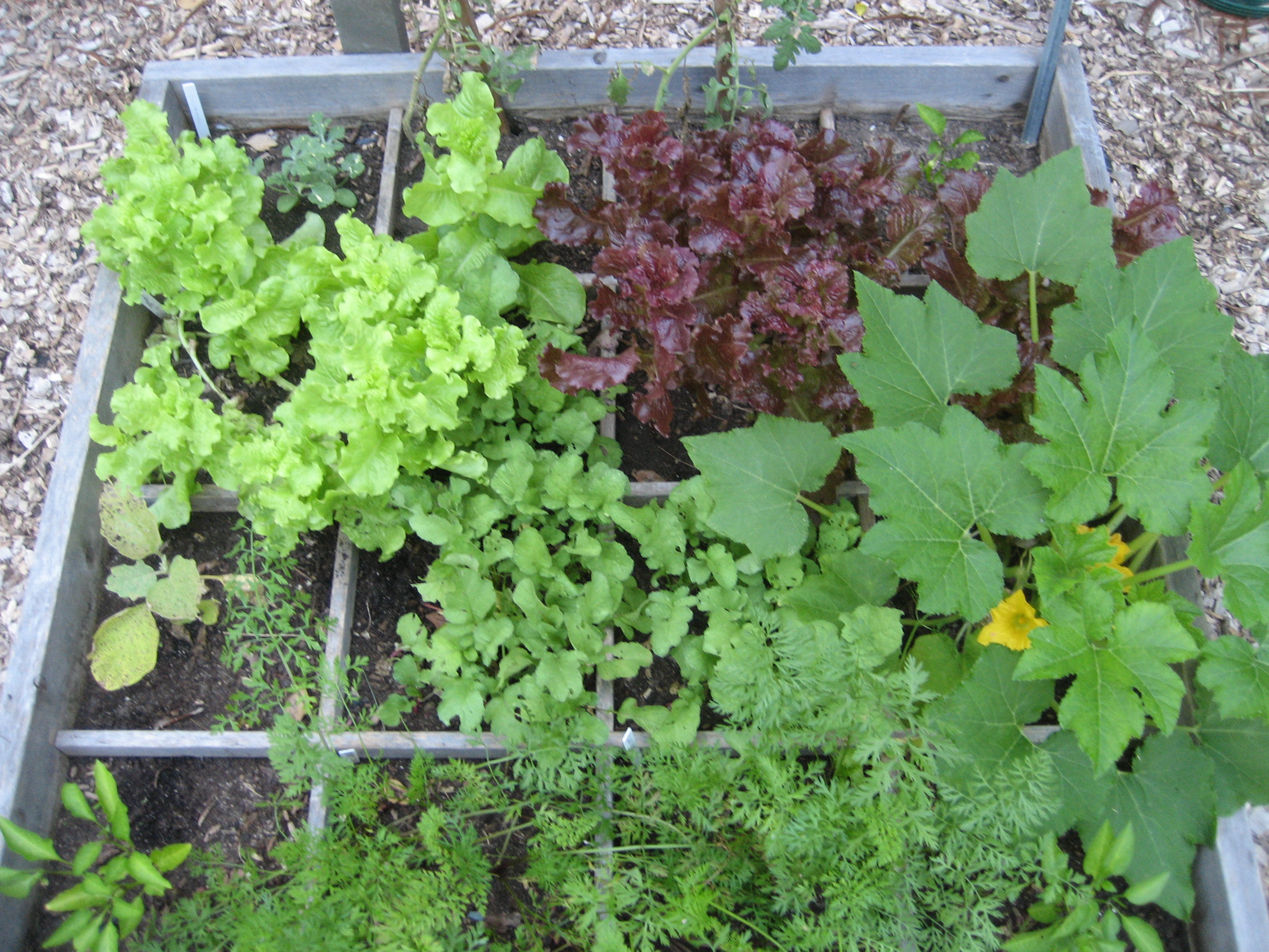 In the garden growing vegetables in raised beds master gardeners of northern virginia - Square meter vegetable garden ...
