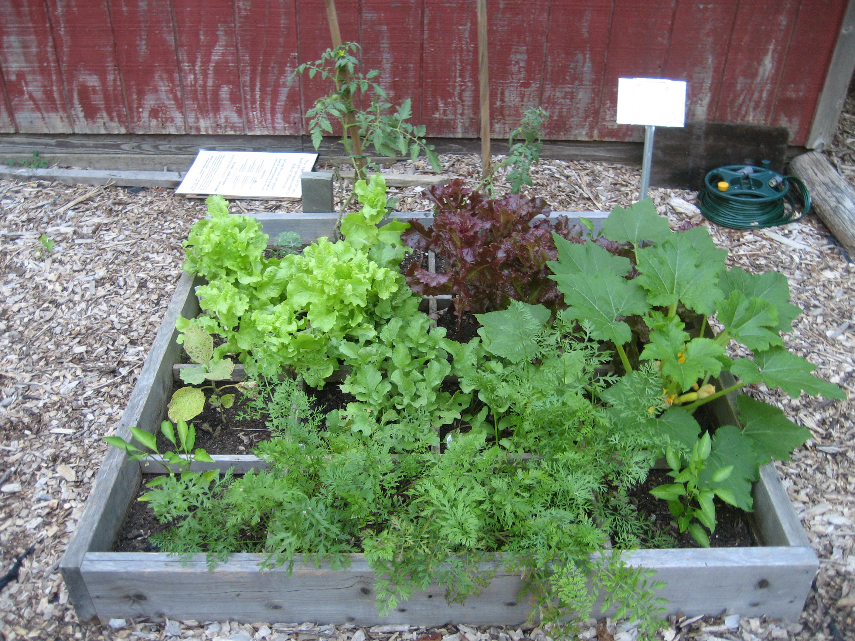 In The Garden Growing Vegetables in Raised Beds Master