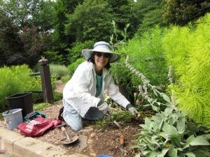 Elaine Mills weeding Bed 8 in June