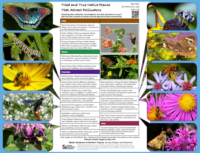 Best Bets for Pollinator Plants