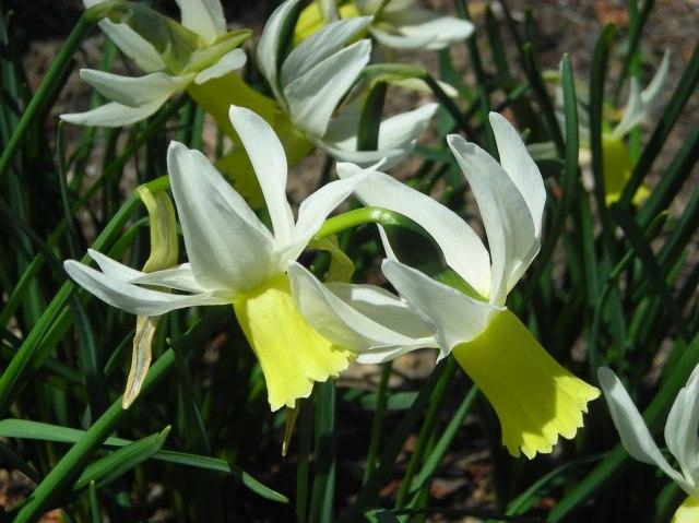 4 - White and Yellow