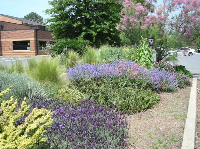 Color massing in the Waterwise garden. Photo: Christa Watters