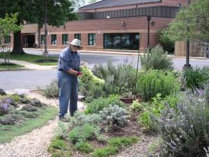 Gardener in Chief: Audrey Faden at work in Simpson Gardens, next to the Alexandria YMCA.