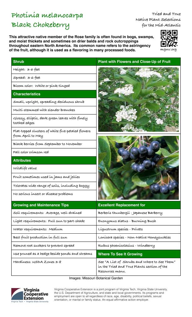 Photinia melanocarpa, Black Chokeberry