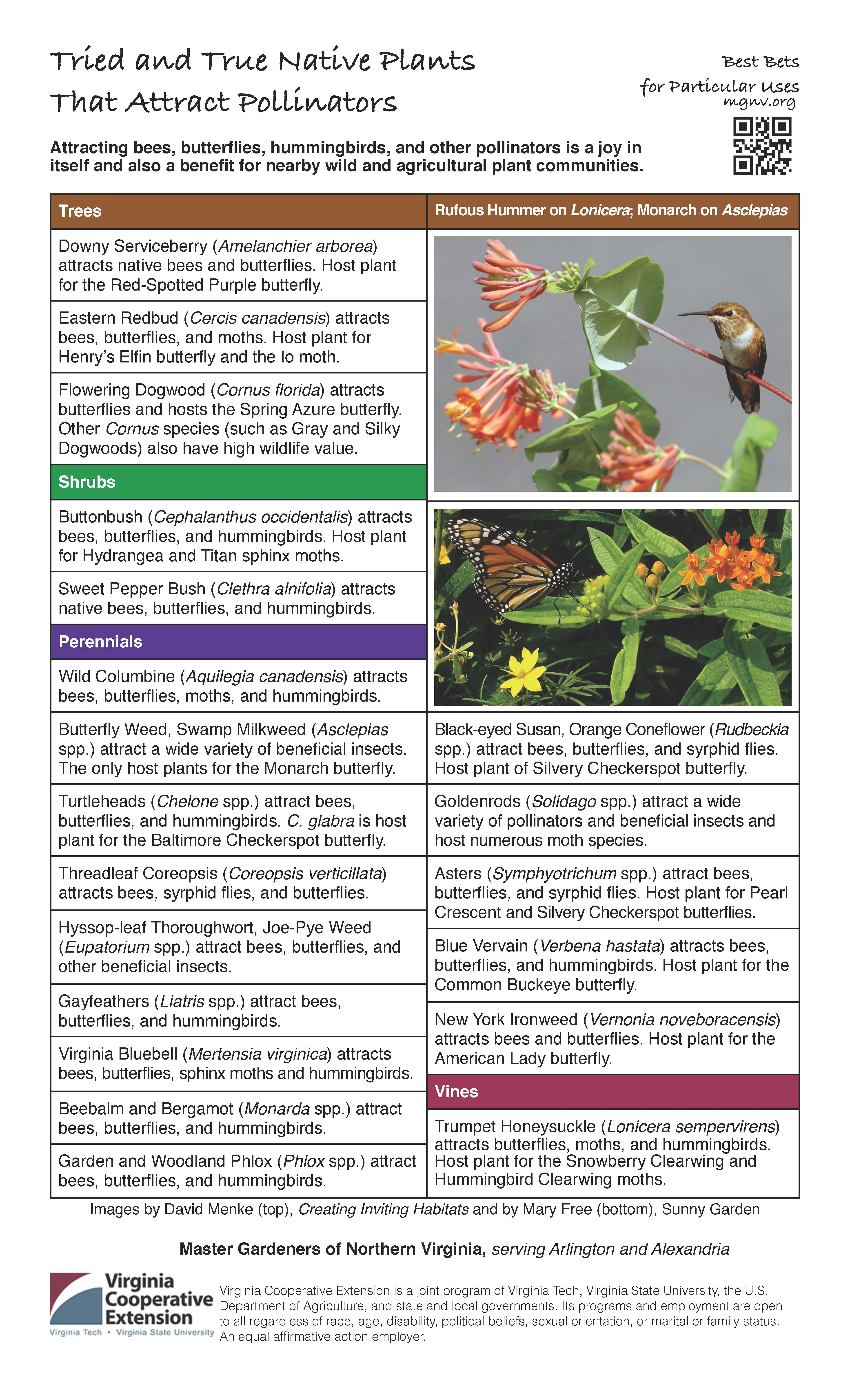 best bets to attract pollinators master gardeners of northern