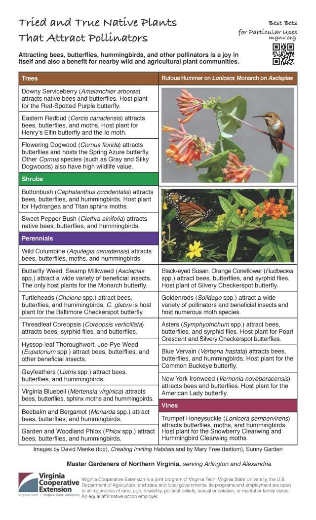 Best Bet plants for pollinatorsR2
