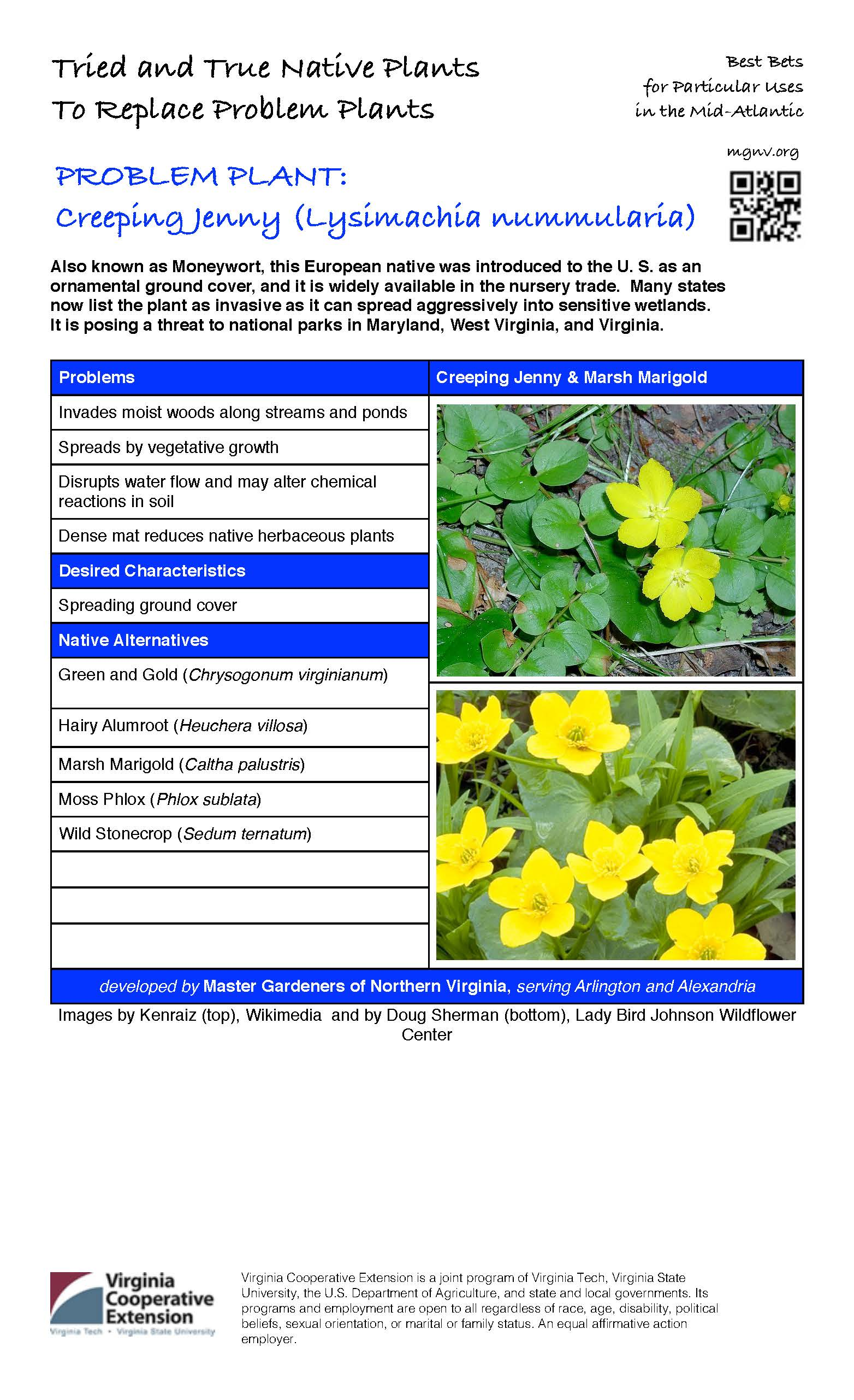 Problem Plant: Creeping Jenny | Master Gardeners of Northern Virginia
