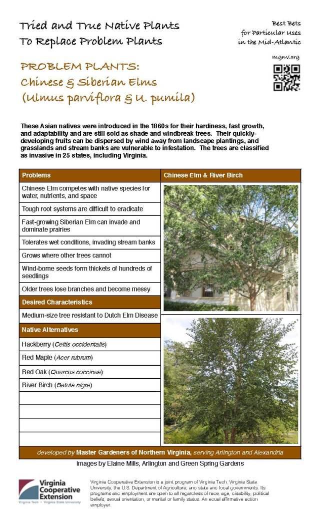 Problem Plant - Chinese & Siberian Elms