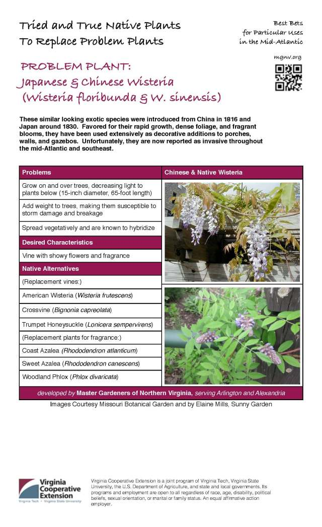 Problem Plant - Japanese & Chinese Wisteria