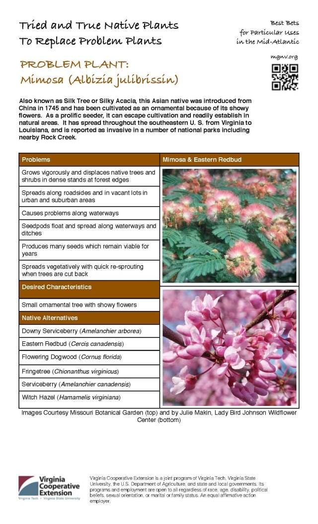 Problem Plant - Mimosa