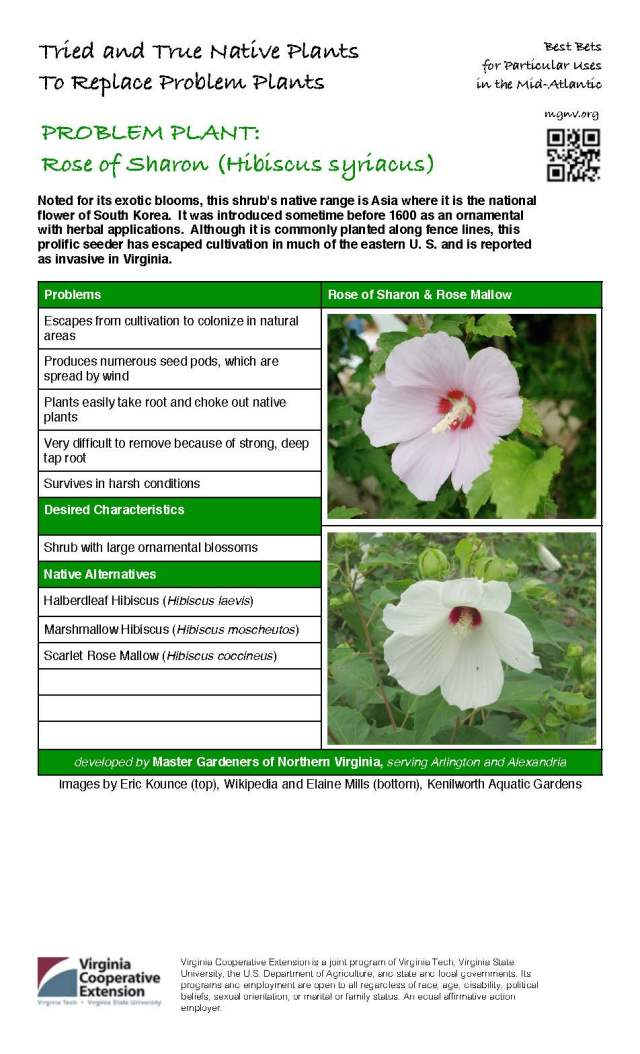 Problem Plant - Rose of Sharon
