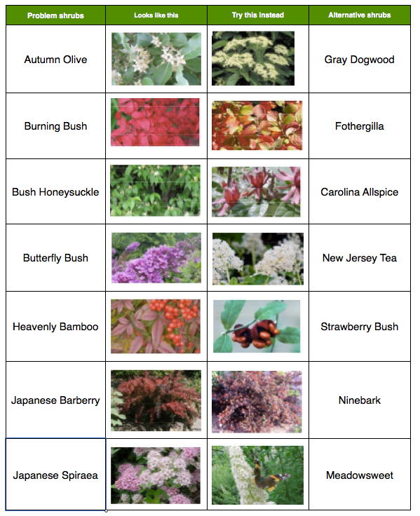 Problem Shrubs   Master Gardeners of Northern Virginia