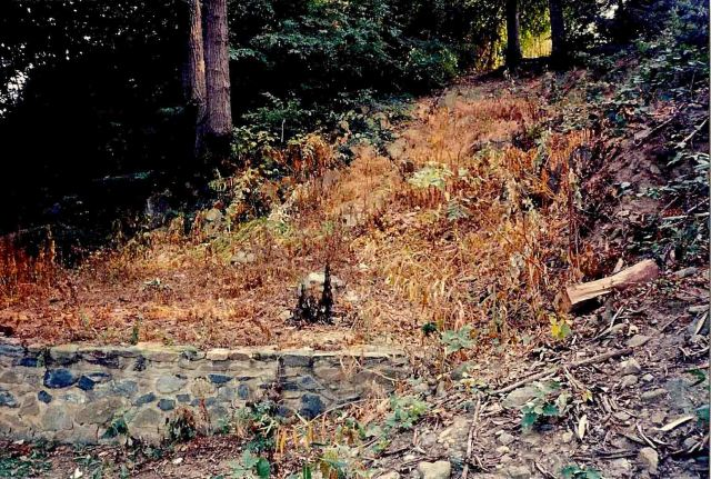 Close-up of rubble and invasive vegetation.