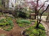 Shade Garden, April 2014