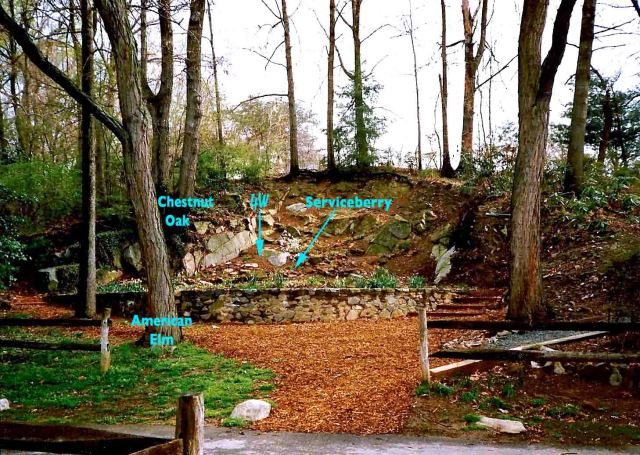 The Quarry/Shade Garden (with reference points) during the spring of 1989.