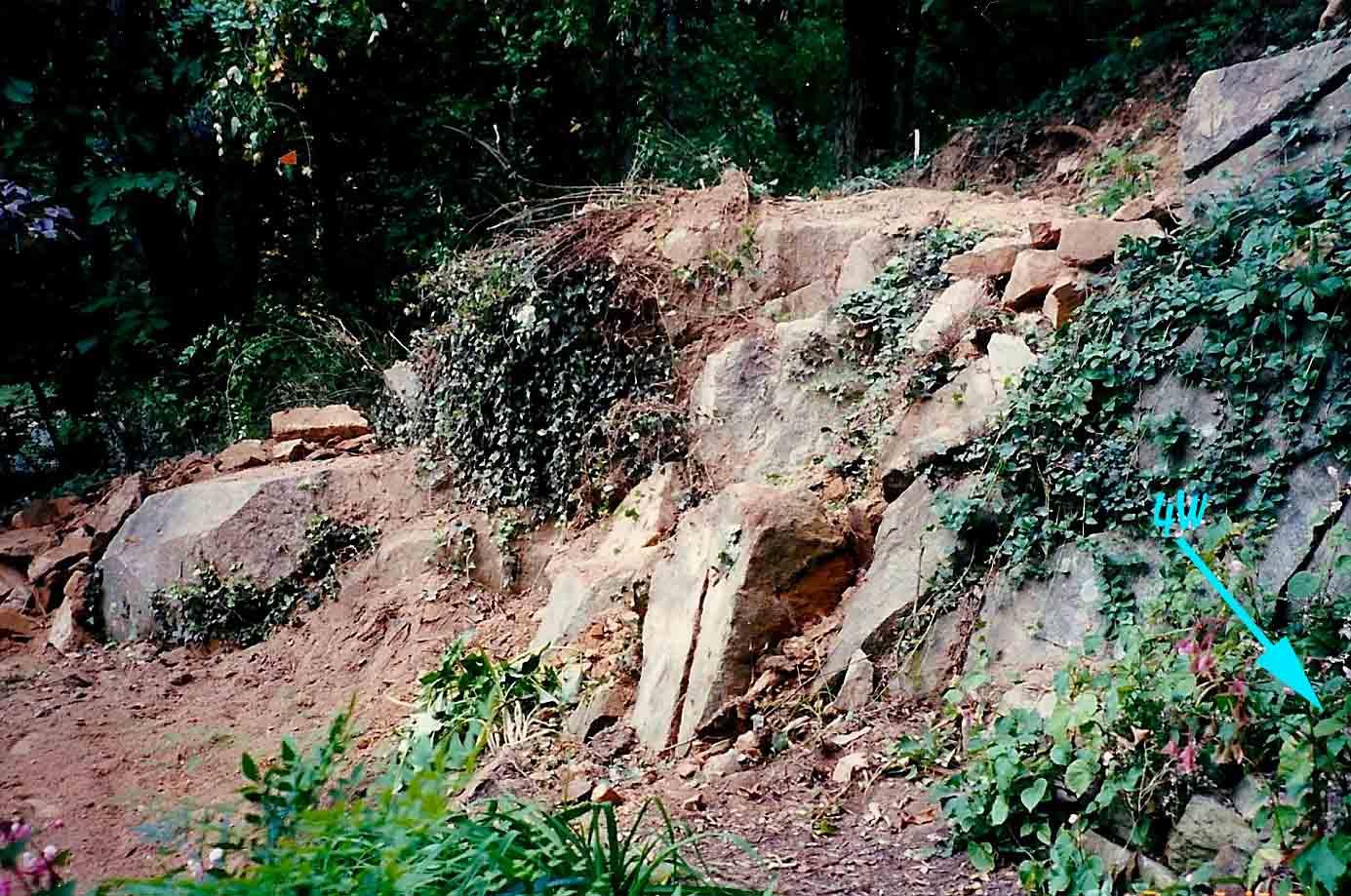 Quarry Shade Garden At Bon Air Park: Happy 25th Anniversary Quarry/Shade Garden!