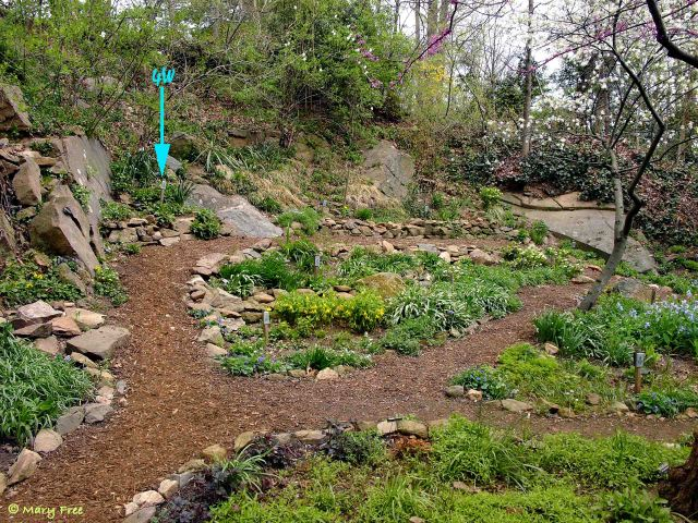 Terraced beds and bordered paths in the Quarry/Shade Garden in April 2014.