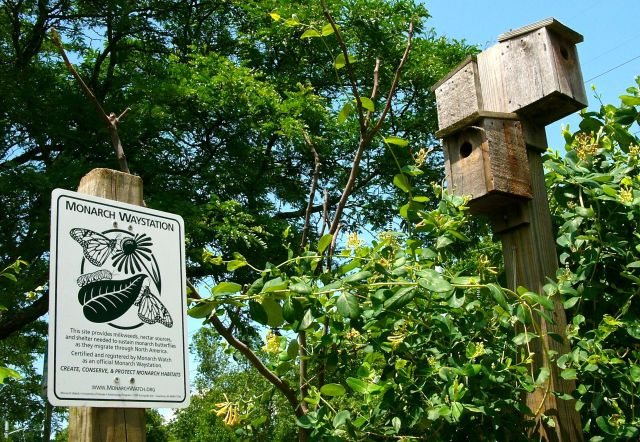 Lonicera sempervirens thrives near the new sign certifying the Bluemont Park Bird and Butterfly Garden as a Monarch Waystation.