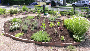 Replanted herb bed (Bed 4) and Bed 8 in background.