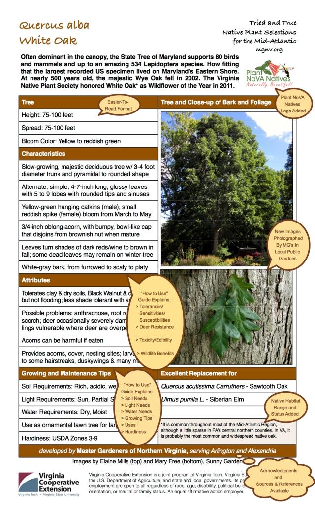 z Quercus alba Annotated