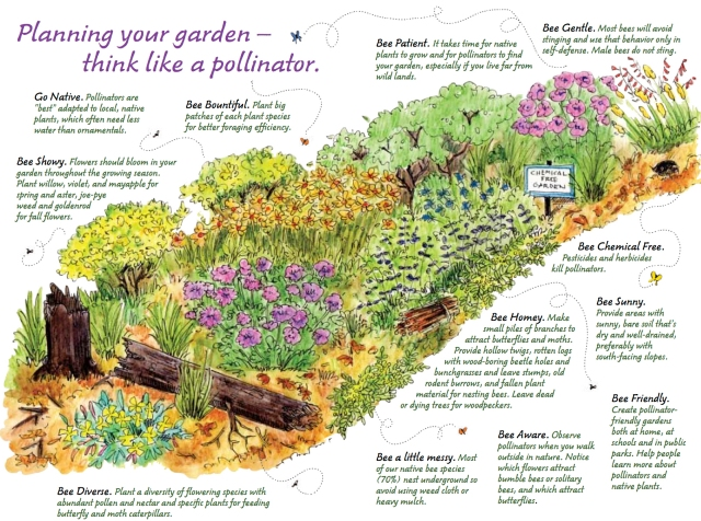 Image result for pollinator garden