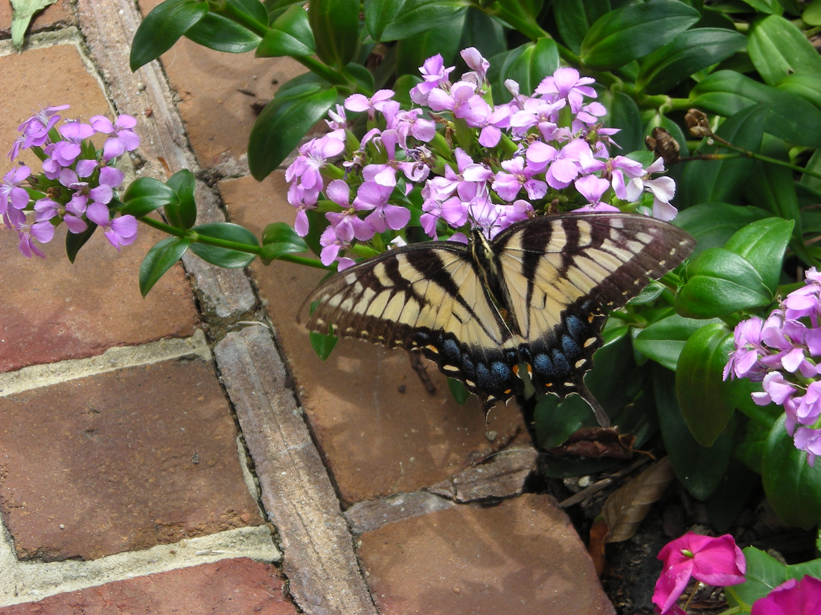 The Long View – Meditations on Gardening (The Thing About Gardeners ...