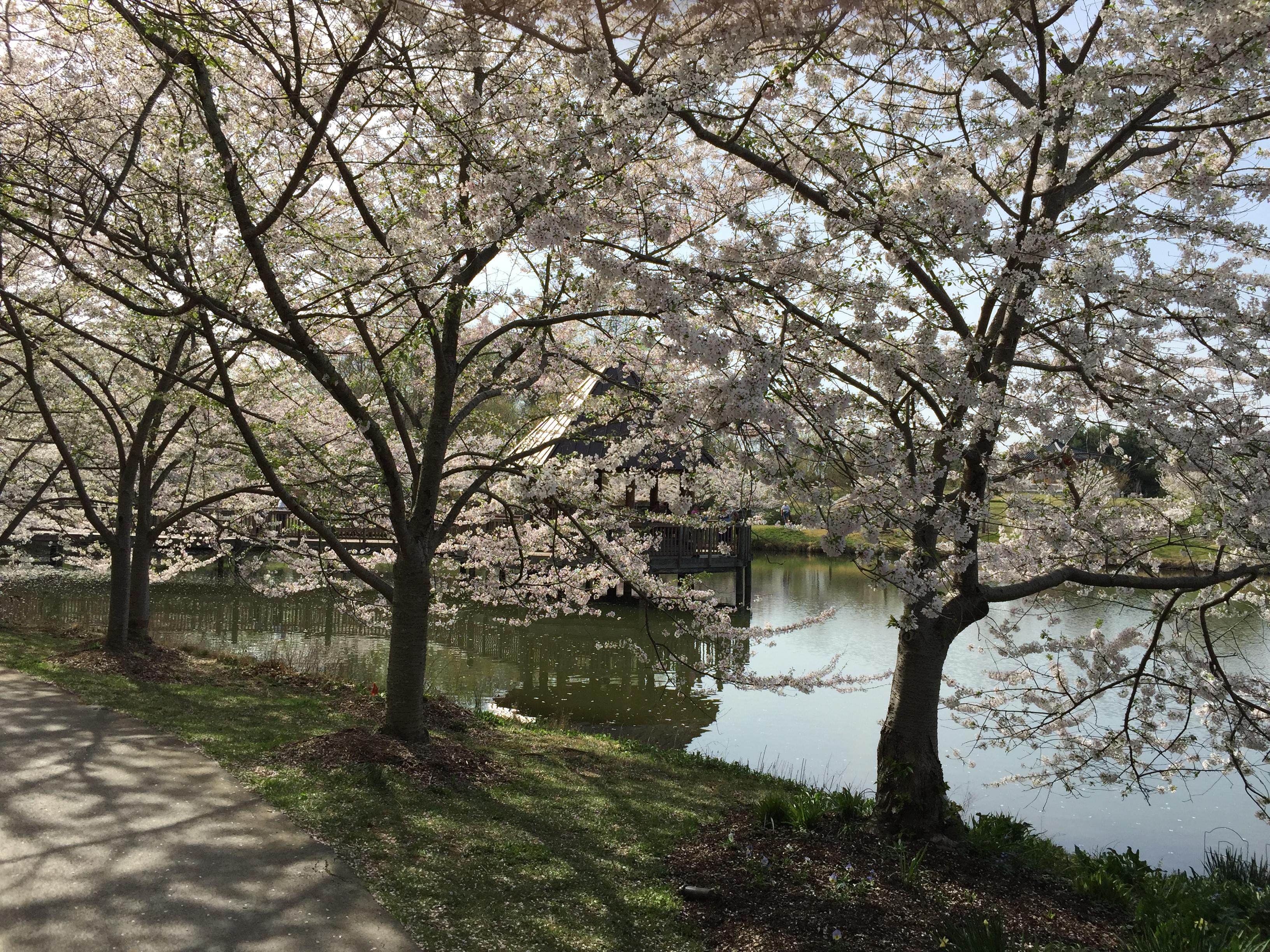 Quarry Shade Garden At Bon Air Park: Regional Gardens: Meadowlark Botanical Gardens