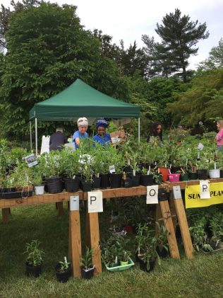 Master Gardener helping at Plant Sale