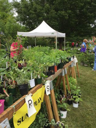 Sunny plants at Greenspring Garden Plant Sale