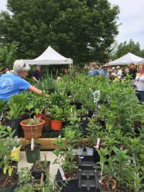 Plant sale at Greenspring Garden