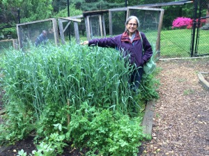 Judy with the Rye and Vetch