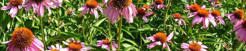 Sunny Garden   Master Gardeners of Northern Virginia