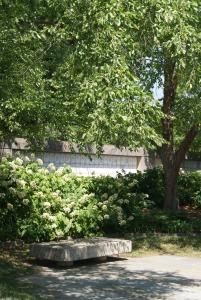 Hydrangea quercifolia, Oakleaf Hydrangea