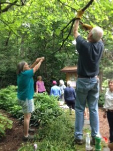 Hugh Robinson and Mary Frase pruning the Shade Garden's redbud tree.