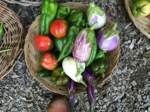 Peppers, Eggplants