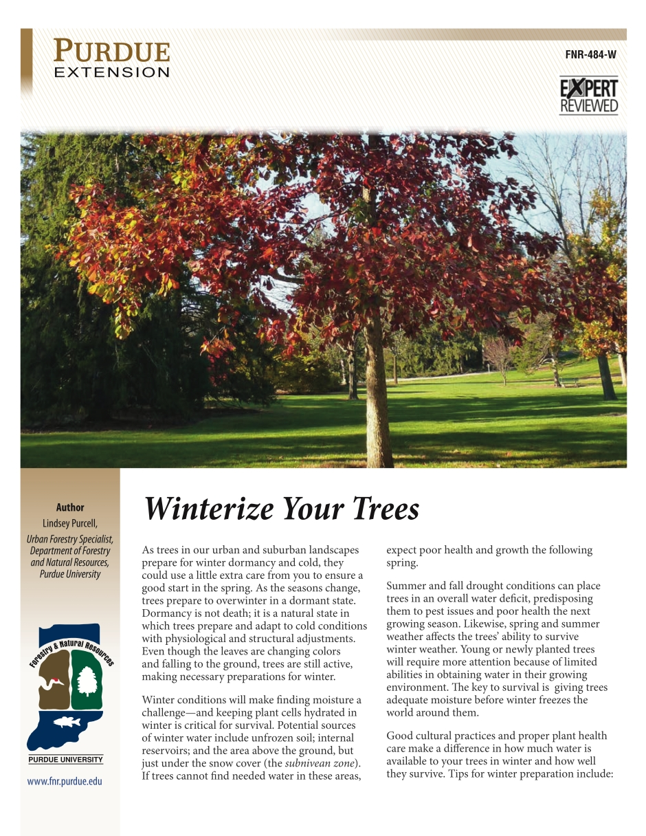 Winterize Your Trees
