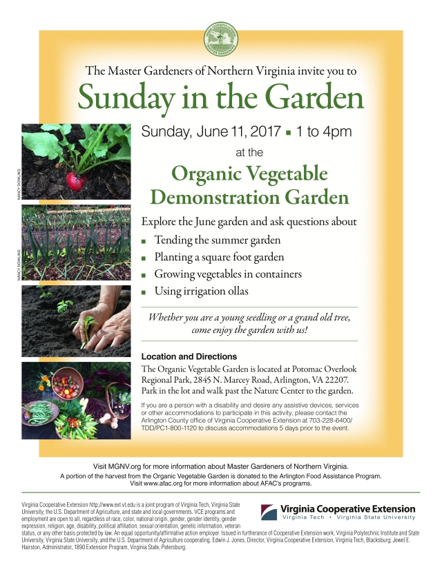 The Master Gardeners of Northern Virginia invite you to Sunday in the Garden Sunday,June11,2017 1 to 4 pm at the Organic Vegetable Demonstration Garden Explore the June garden and ask questions about  Tending the summer garden  Planting a square foot garden  Growing vegetables in containers  Using irrigation ollas  Whether you are a young seedling or a grand old tree, come enjoy the garden with us!   Location and Directions The Organic Vegetable Garden is located at Potomac Overlook Regional Park, 2845 N. Marcey Road, Arlington, VA 22207. Park in the lot and walk past the Nature Center to the garden. If you are a person with a disability and desire any assistive devices, services or other accommodations to participate in this activity, please contact the Arlington County office of Virginia Cooperative Extension at 703-228-6400/ TDD/PC1-800-1120 to discuss accommodations 5 days prior to the event.