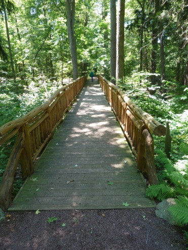 One of the bridges along the forest path in Fern Valley
