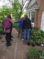Emeritus Master Gardener Judy Funderburk discusses shade plants