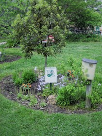 The butterfly soak bed with its Monarch Way Station sign