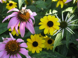 Flowers and pollinators at the garden