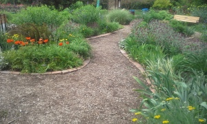 Edge stones turned to create path border along curved garden beds