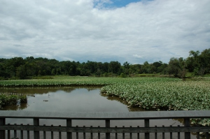 Tidal marsh seen from the boardwalk