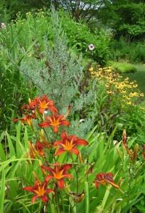 Daylilies, Juniper, Black-eyed Susans