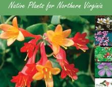 Native Plants for Northern Virginia Guide