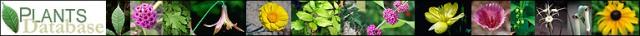 USDA Plants Database Logo