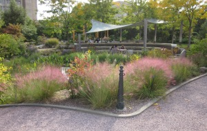 Drifts of muhly grass in a naturalistic landscape at the National Garden, USBG